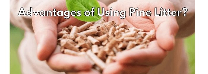 Advantages of Using Pine Litter